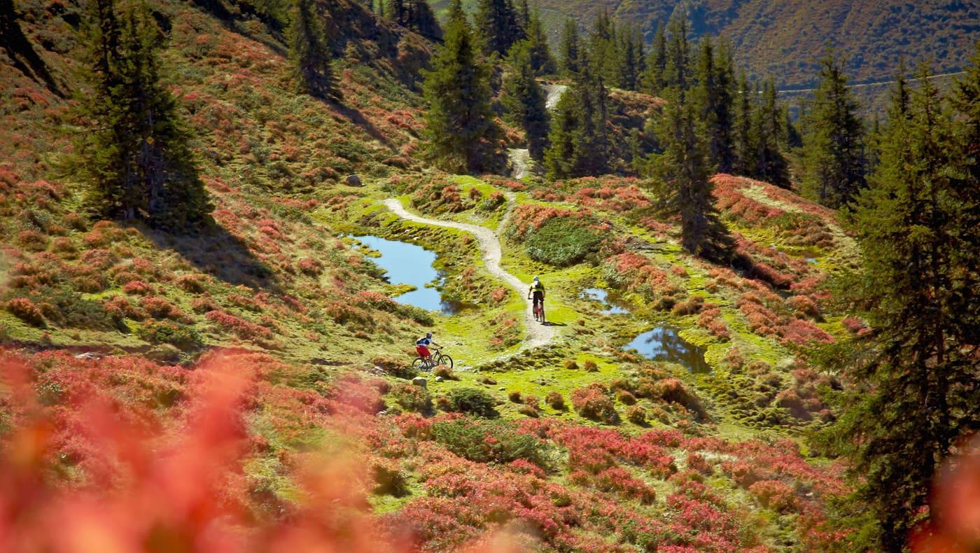 Hacklberg Trail mit dem Mountainbike