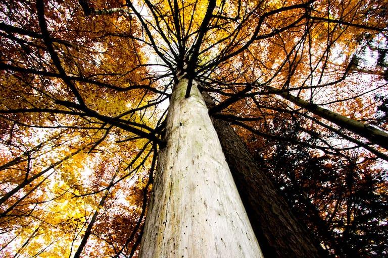 Ein Wald voller bunter Blätter