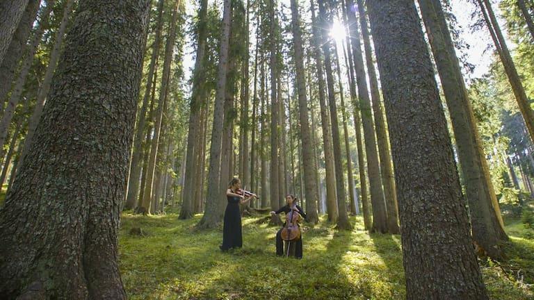Konzert im Klangwald von Val di Fiemme
