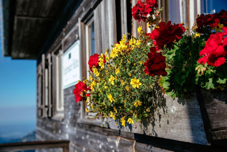 Auf der Hütte warten Blumen an den Fenstern.