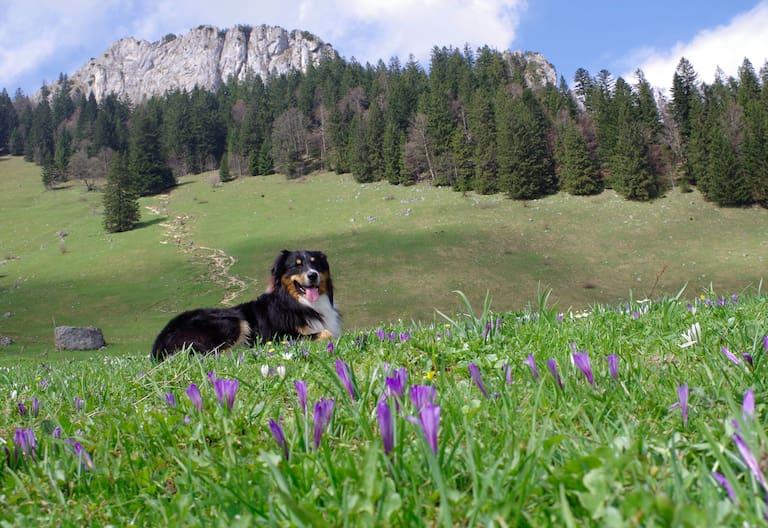 Heuberg: Wandern mit Hund
