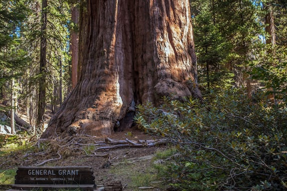 Mammutbäume Kalifornien Sierra Nevada