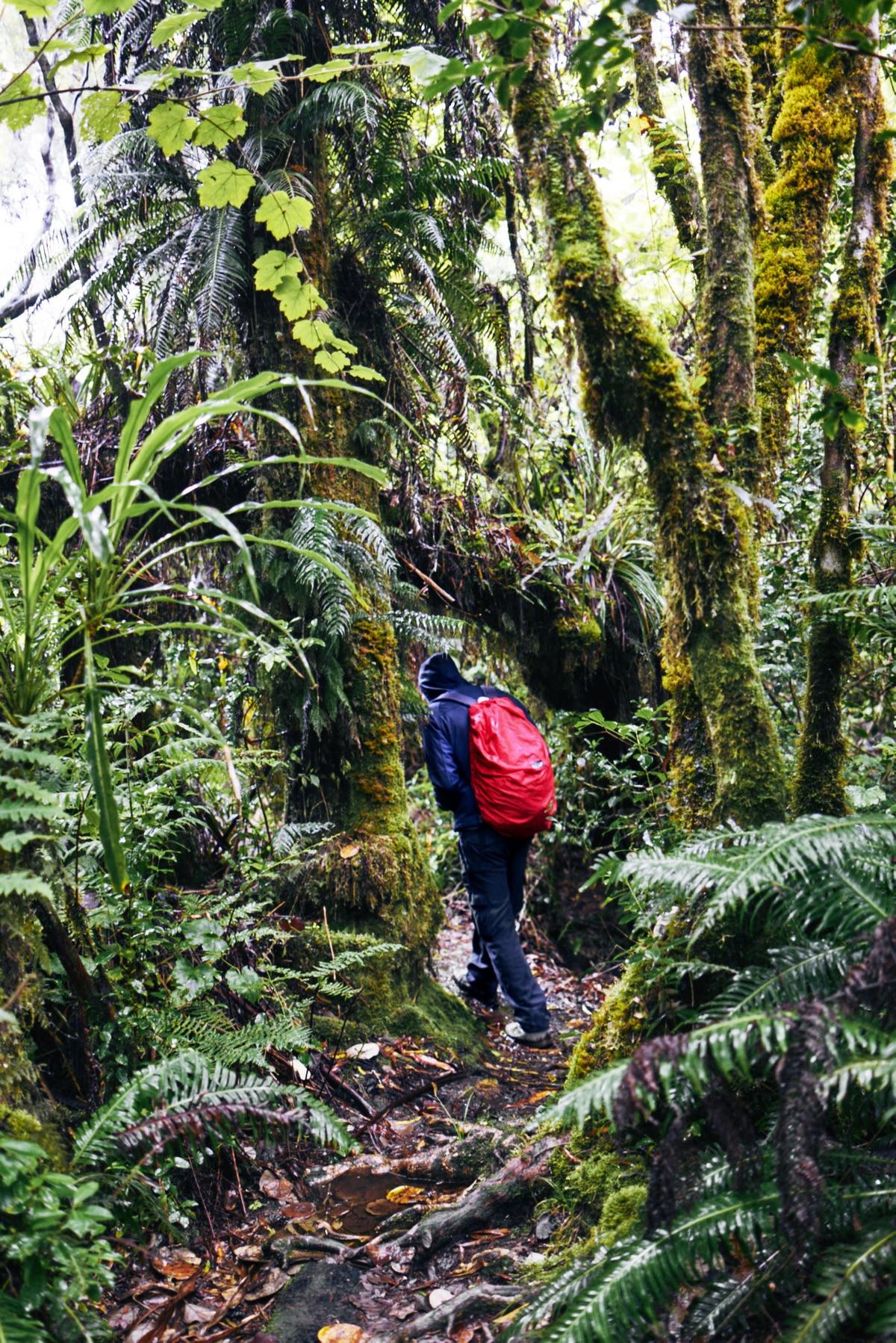 Reiseinfos: Wandern auf La Réunion  Bergwelten