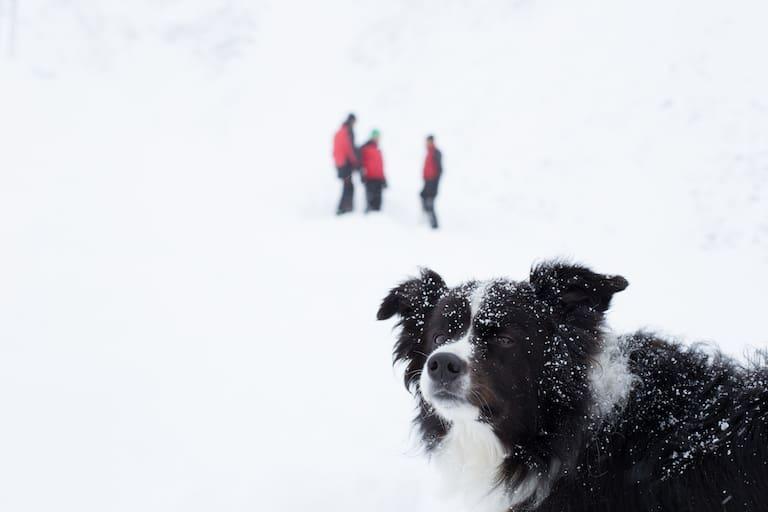 Lawinenhund Tirol