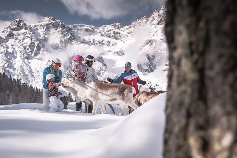 Rentiere im Skigebiet 3 Zinnen Dolomiten