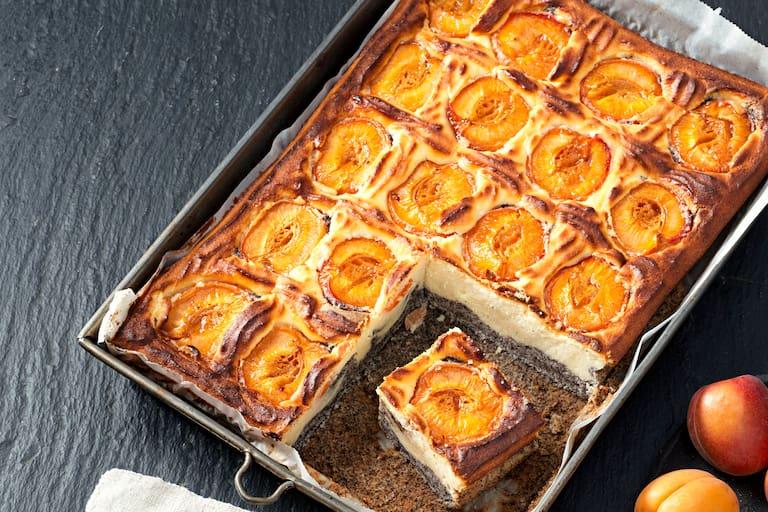 Topfen-Mohn-Marillen-Kuchen