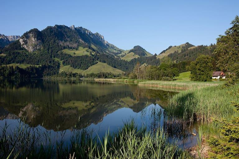Schwarzsee Freiburg