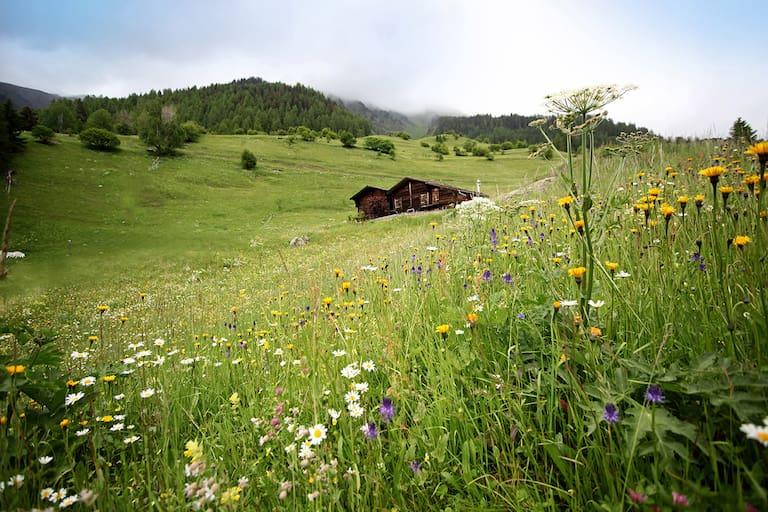 Wallis Galmihornhütte
