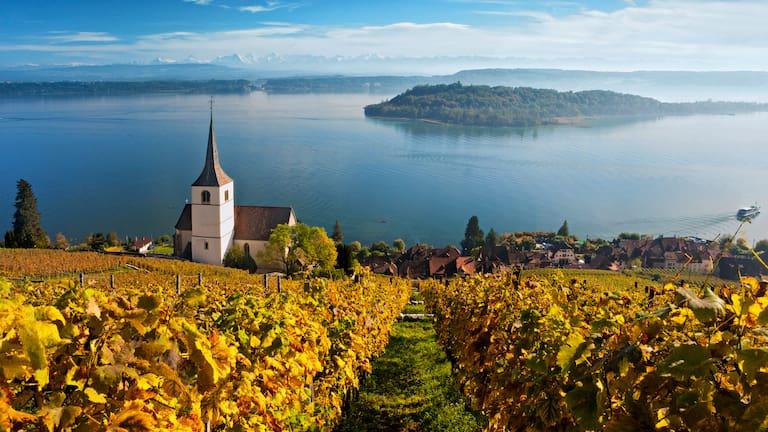 Rebberge am Bielersee im Kanton Bern: Blick auf den See mit der St. Petersinsel