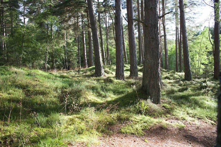 Eine Wanderung durch den Wald hat viele positive Effekte auf uns.