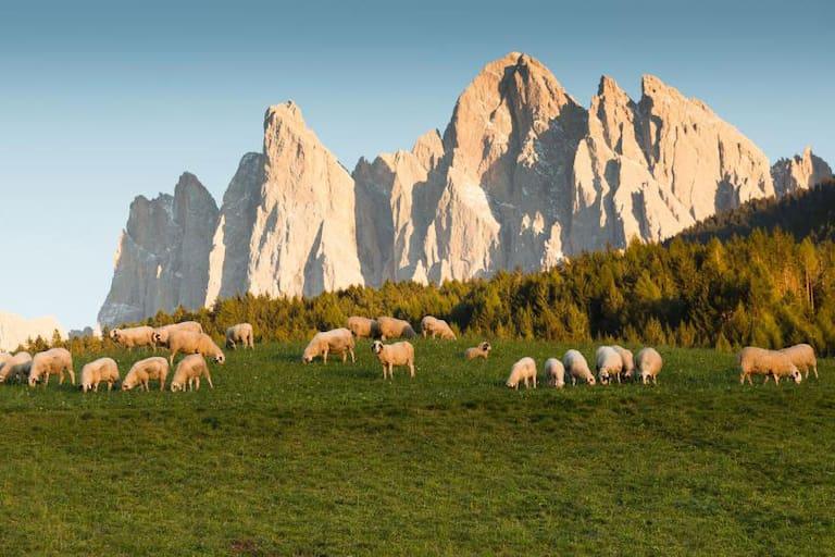 Südtirol ohne Auto: 8 Tourentipps
