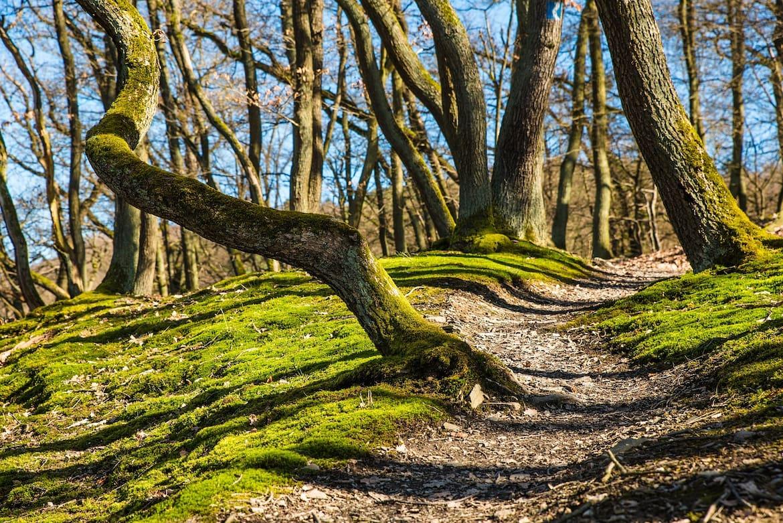 Bäume setzen Moleküle frei, die Stresshormone senken.