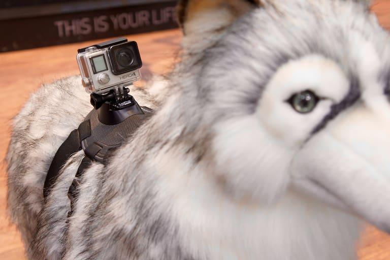 GoPro Dog Fetch