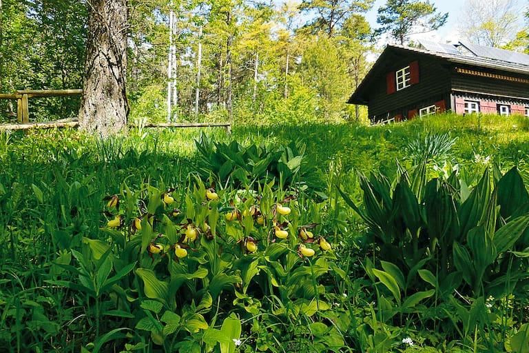 Orchideenparadies auf dem Hasenbuck: Wandern in Schaffhausen in der Schweiz