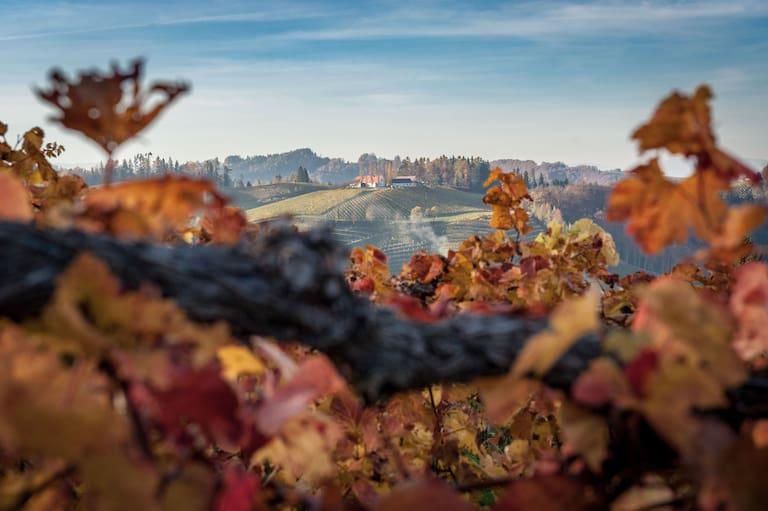Herbstliche Wanderung durch die Heiligengeistklamm an der südsteirischen Weinstraße bei Leutschach