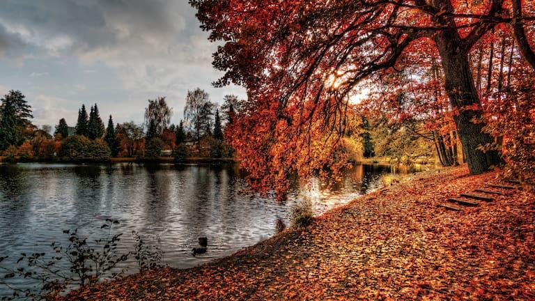 Bergwetter: Herbststimmung am See mit Laubbaum