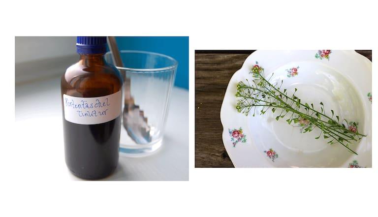 Capsella Bursa-Pastoris: Heilpflanze Hirtentäschel