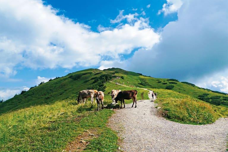 Wandern in den Allgäuer Alpen: Aufs Fellhorn in Vorarlberg