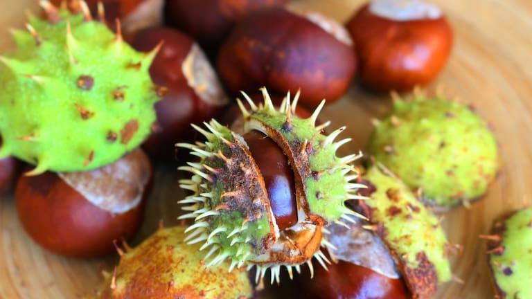 Herbstgruß: Kastanien