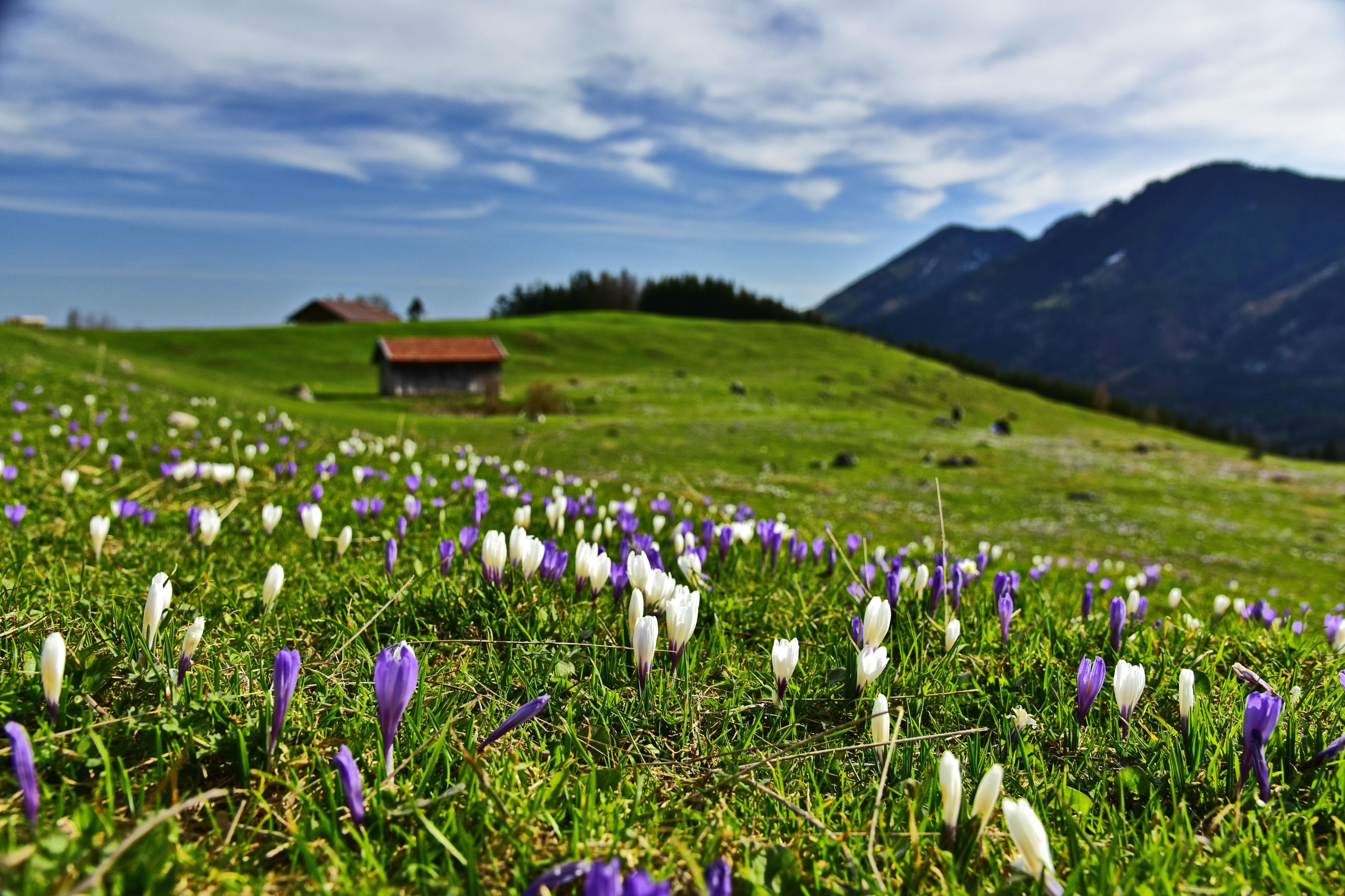 10 wanderungen f r den fr hling bergwelten for Bilder fruhling