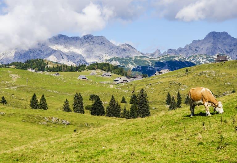 Berg-Know-How: Kuhl bleiben