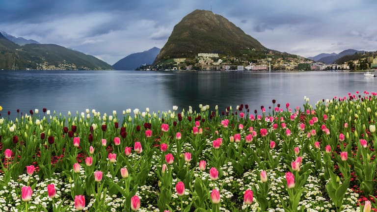 Tulpen am Luganersee