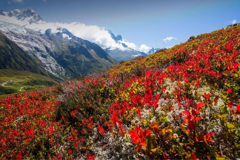 Die Farben des Spätsommers, im Hintergrund das Mont Blanc-Massiv