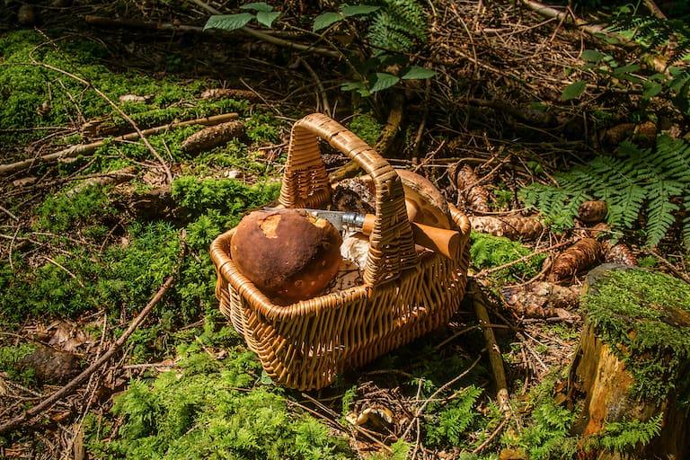 Pilze sammeln Gesetze