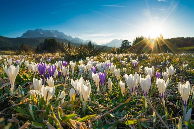 Frühling Krün Bayern