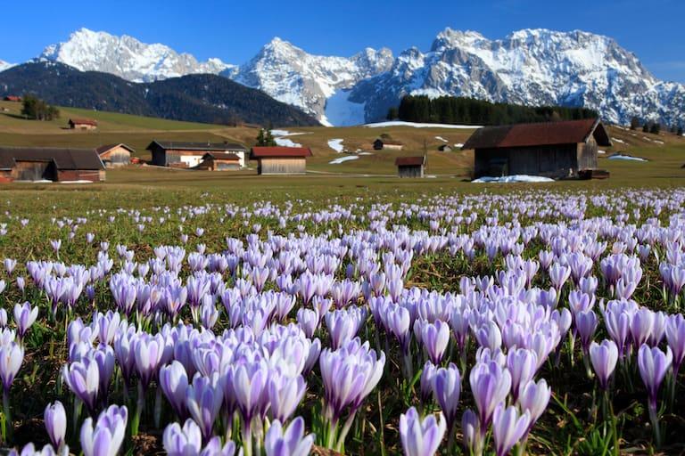 Der Samstag hat frühlingshafte Wetterverhältnisse zu bieten. Foto: Oberbayern