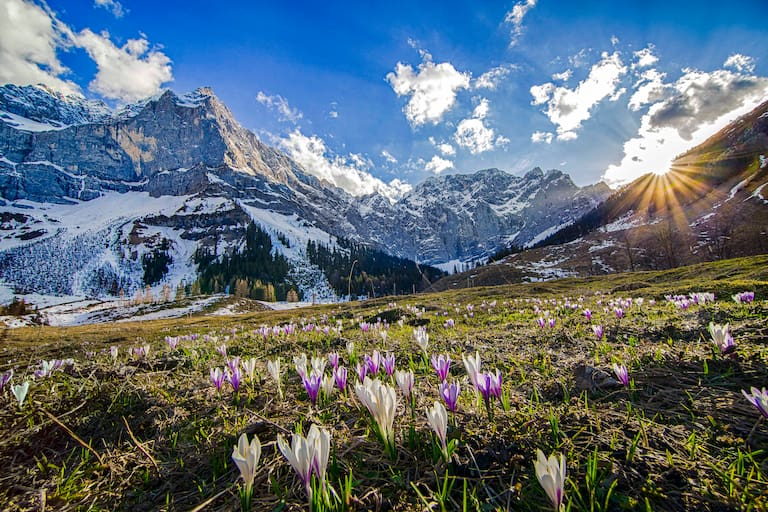 Krokuswiese im Karwendel