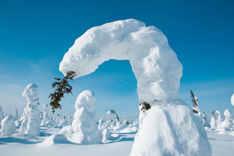 Gebogene Bäume durch Schnee in Kuntivaara, Finnland