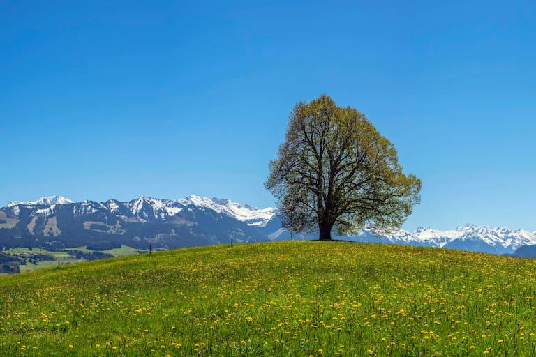 Allgäu Frühling