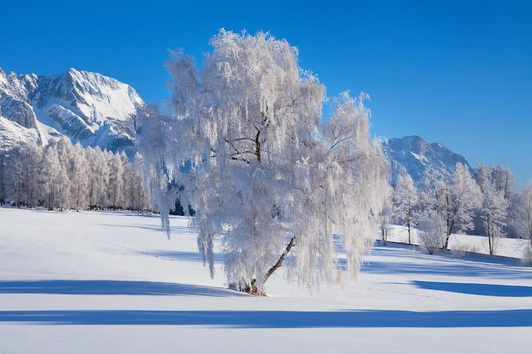 Oberflächenreif: an Bäumen wunderschön anzusehen, doch in der Schneedecke verborgen oft eine Gefahr