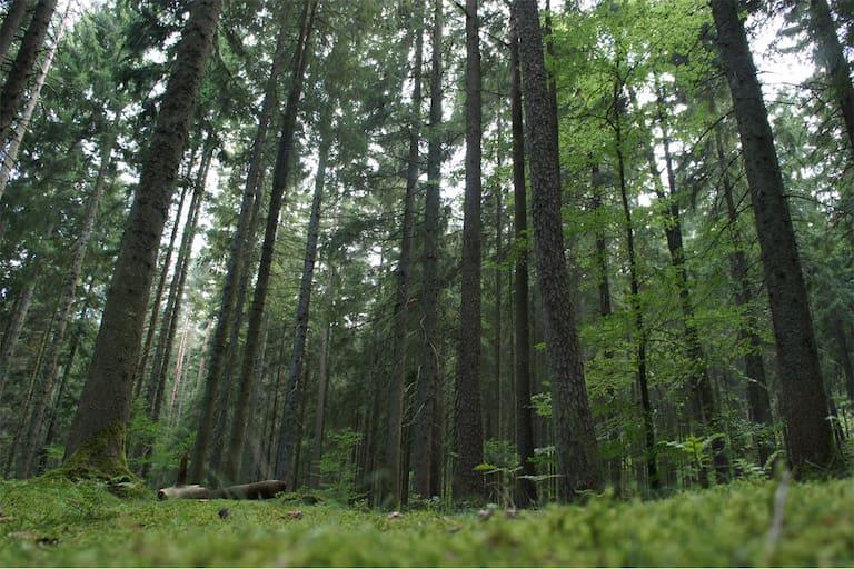 Moldau Bayerischer Wald Wanderung