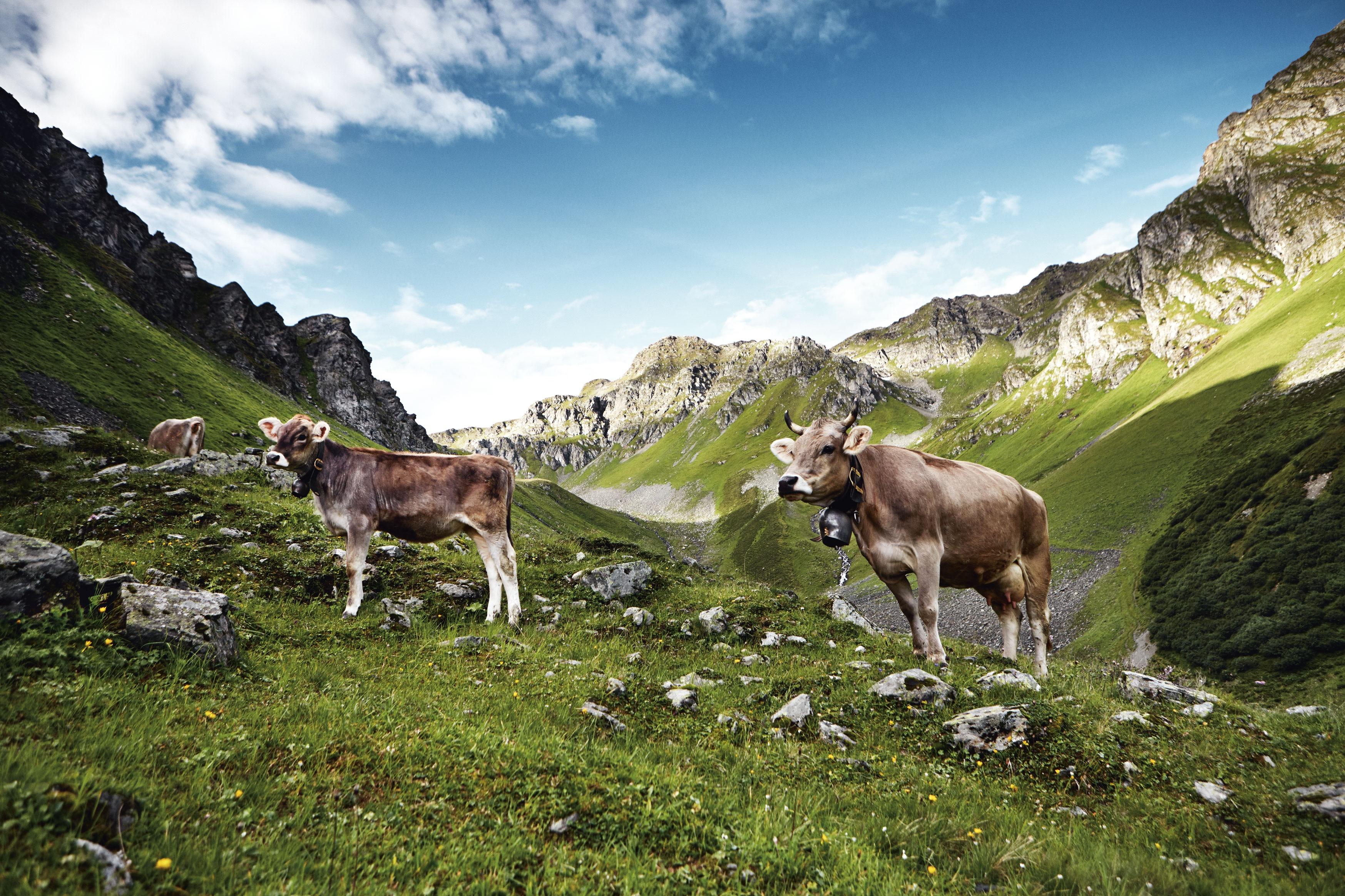 Stiers Alpen