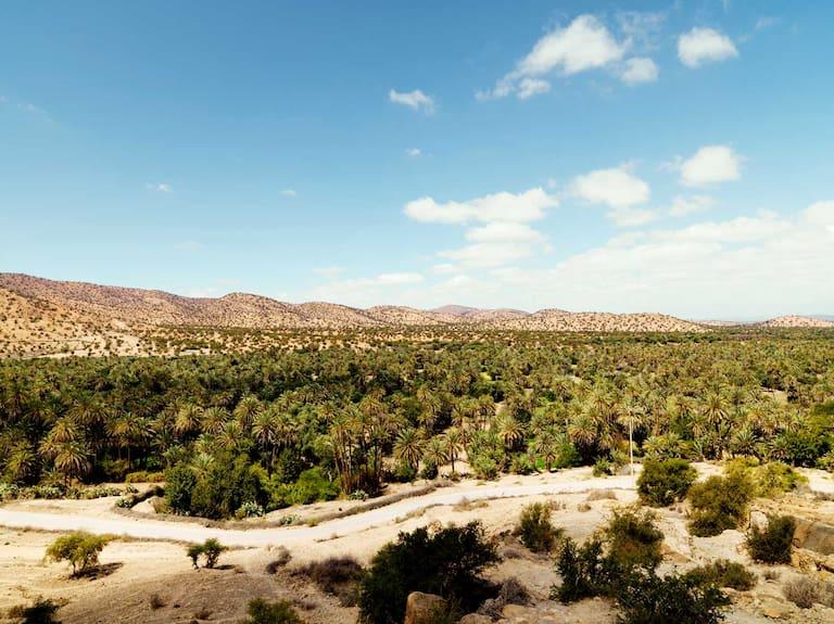 Blick auf die Oase von Tioute in Marokko