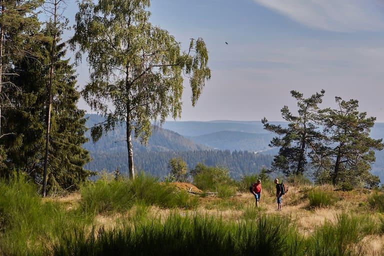 Deutscher Wandertag: Am Rennsteig im Thüringer Wald
