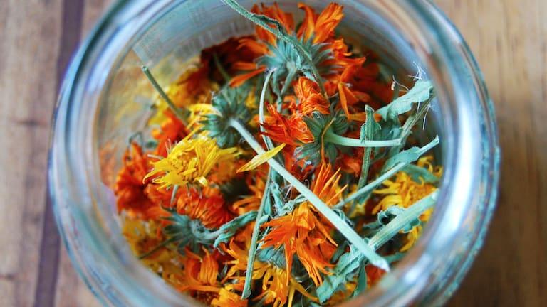 Ringelblumenblüten: Zutat für Salbe