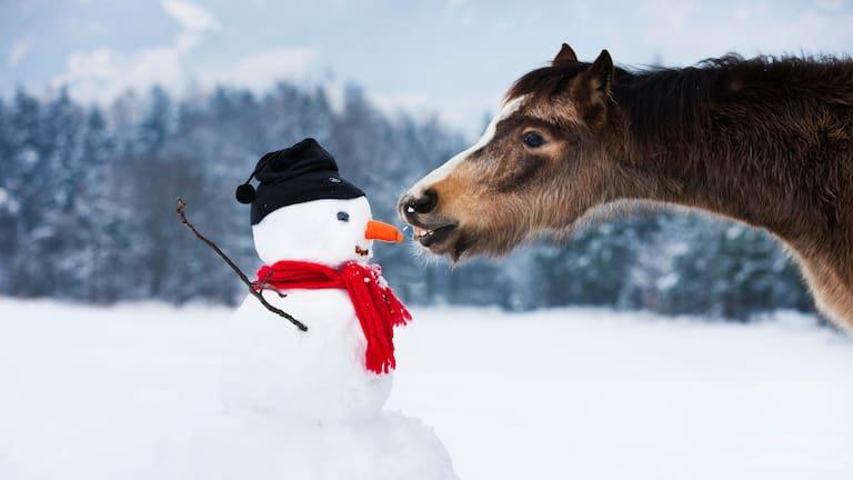 Winter in Tirol: Schneemann und Pferd