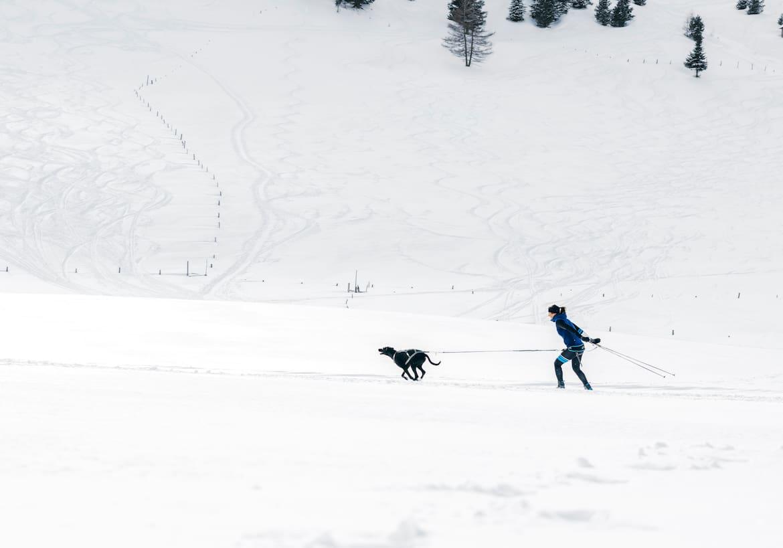 Anna wird von ihrem Hund Finn beim Langlaufen gezogen