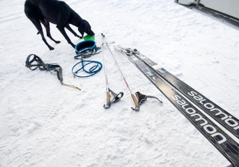 Finn hat sich sein Futter beim Training verdient