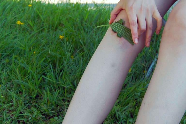 Ehrentag der Pflanze: Wildpflanzen & Heilkräuter