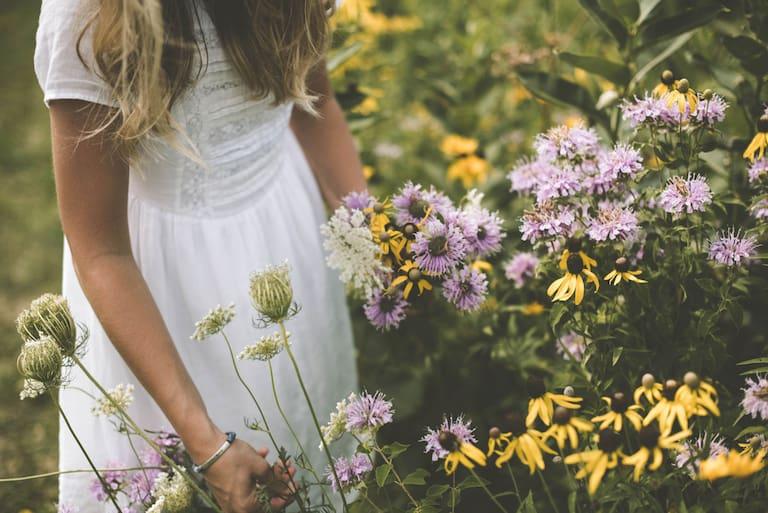 Wilde Wiesenkräuter und ihre heilende Wirkung