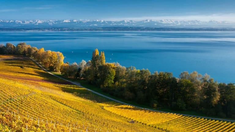 Rebberge und der tiefblaue Neuenburgersee mit Blick auf die Alpenkette