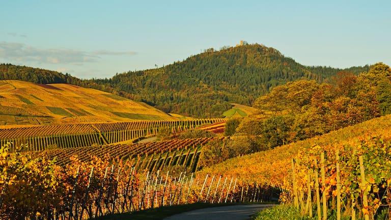 Wandern durch die Weinberge des Remstals in Baden-Württemberg