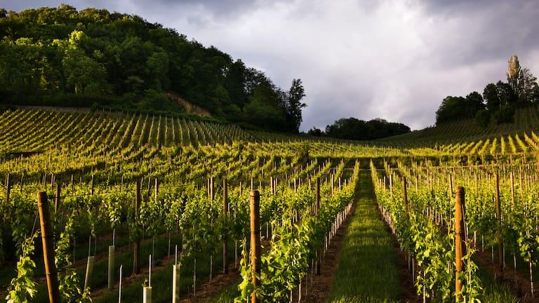 Rebberge in Baselland: Wanderung von Muttenz nach Pratteln bei Basel