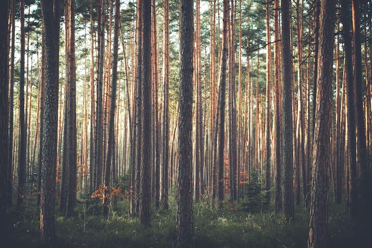 Sehnsuchtsort Wald: 8 Wanderungen