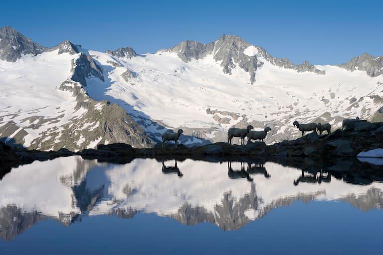 Schwarzsee in den Zillertaler Alpen