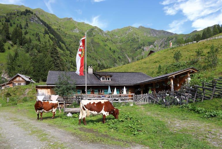 Auf der Kreealm-Kreehütte verbringen rund 12 Milchkühe ihren Sommer.